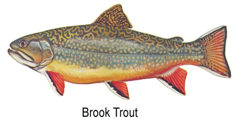 for Trout fishing in wv
