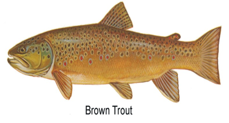 Wv daily trout stocking porn celeb videos for Wv fish stocking